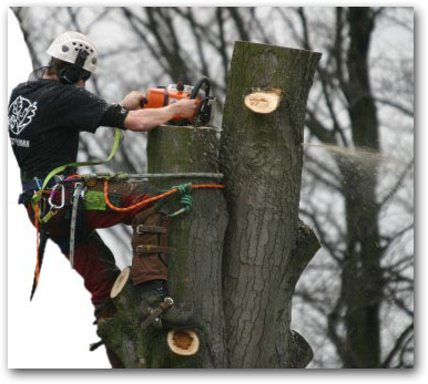 Tree surgeon Loughton