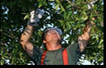 Tree Surgeons In Essex
