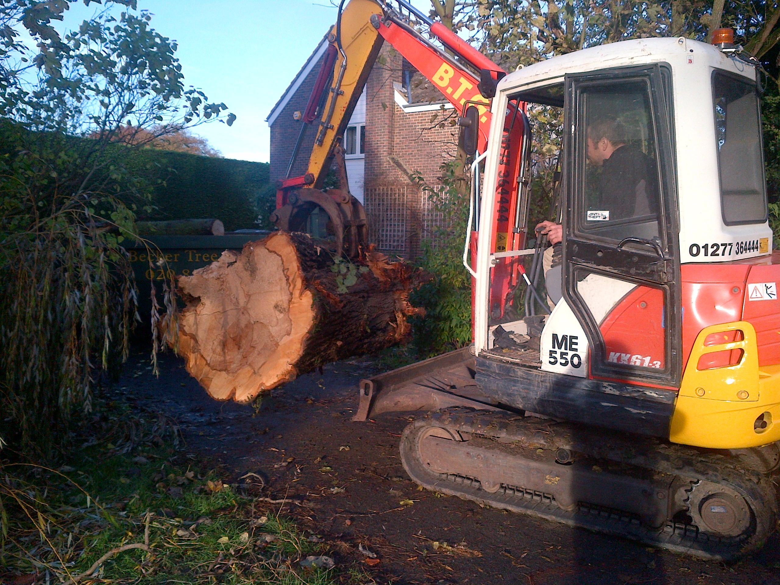 Tree services Essex, Tree services Essex, Tree surgeons Essex