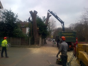 Tree surgeons removing tree